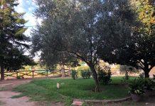 Imatge de la plaça de darrere el museu / Fotografia: Ajuntament Sant Fruitós