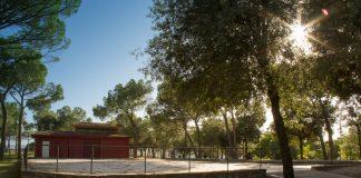 Imatge dels pins del Bosquet / Fotografia: Ajuntament de Sant Fruitós de Bages