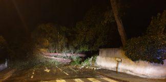 Els arbres que han provocat el tall a Pineda de Bages. - Foto: Ajuntament de Sant Fruitós.